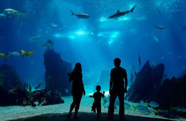 Oklahoma zoos and aquariums