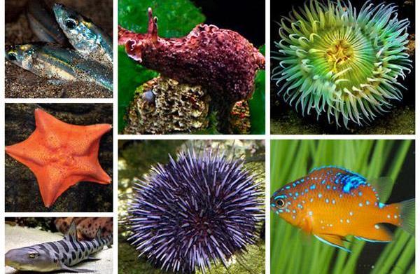 Cabrillo Marine Aquarium near Los Angeles,