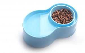 Vegan pet: Eco-friendly pet bowl