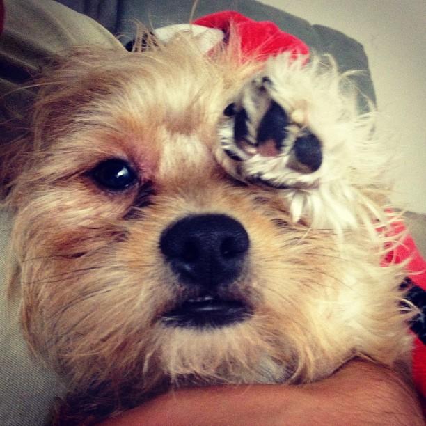 saluting dog