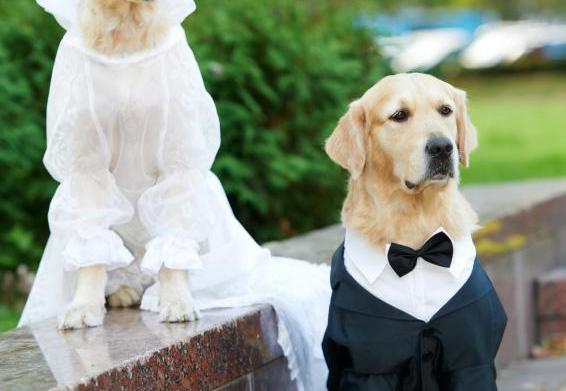 Planning a pet wedding