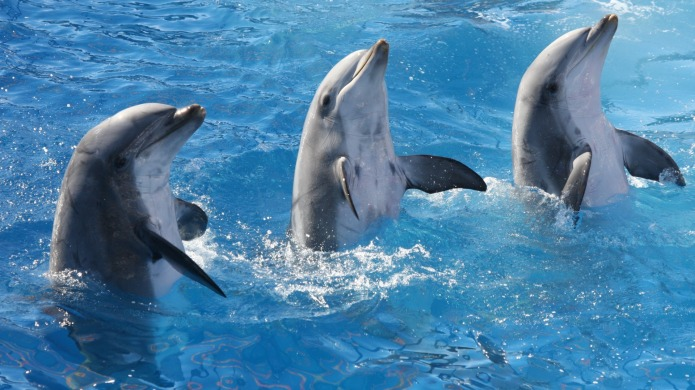 11 dolphin facts that will have