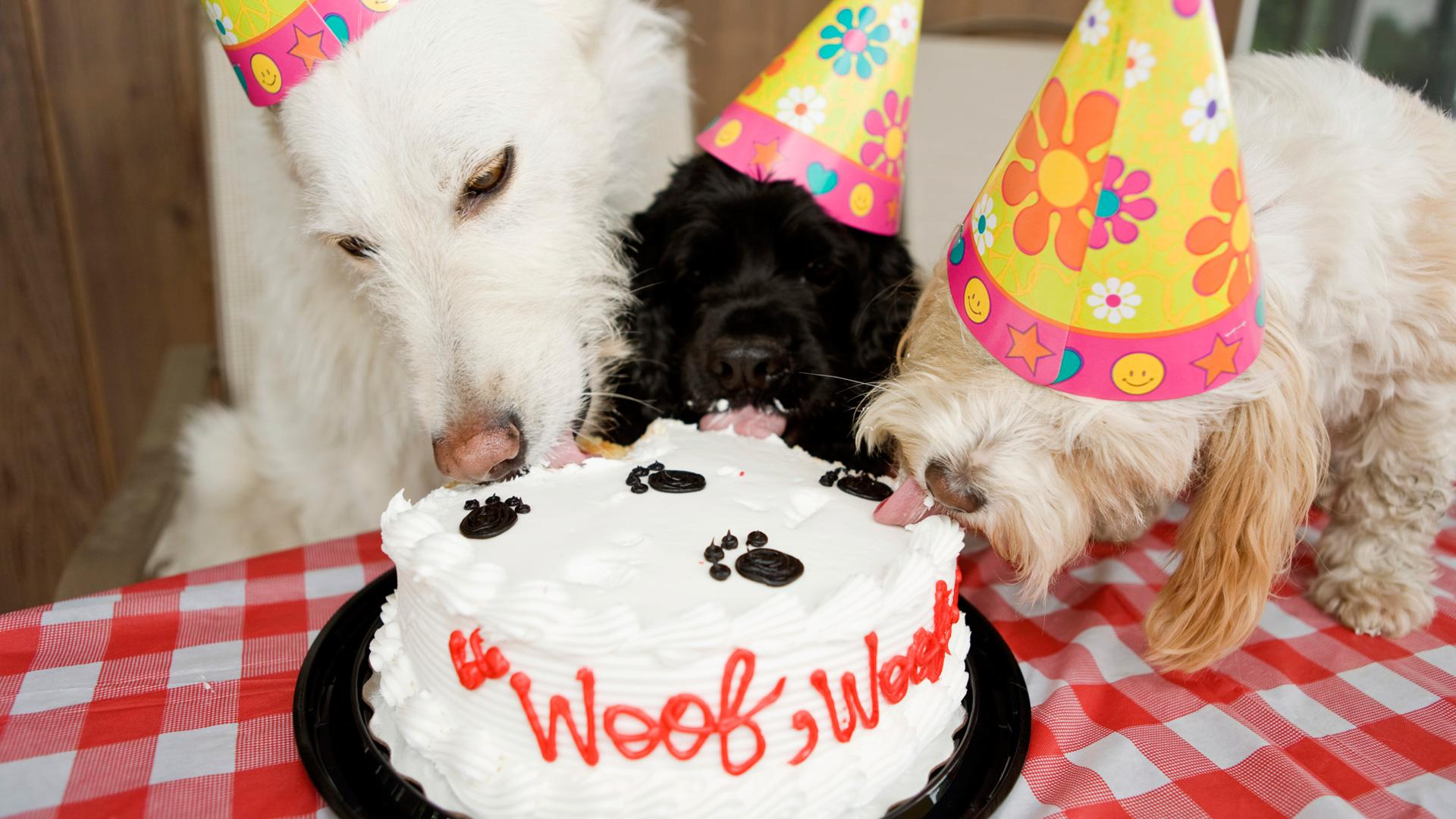 5 Animal Birthday Parties That Were Way Better Than Yours