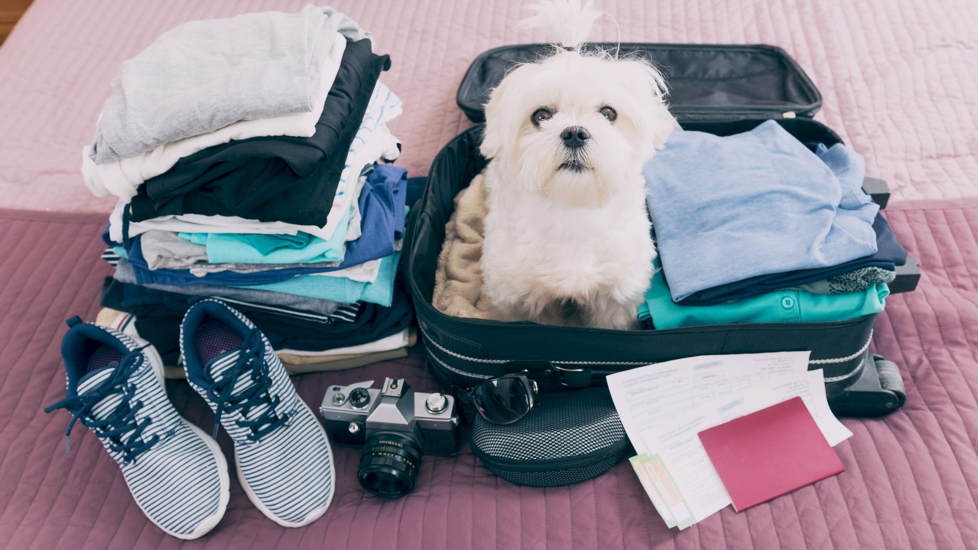8 Airlines That Allow Pets In Cabin What You Need To Know Before