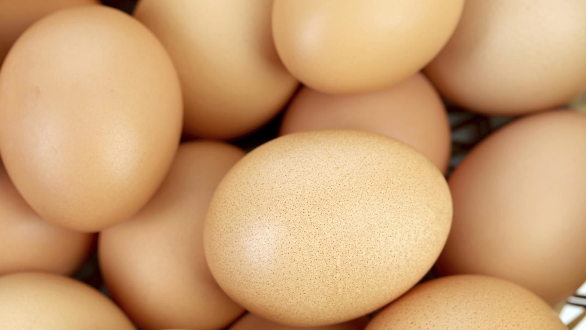 Eggs | Sheknows.ca