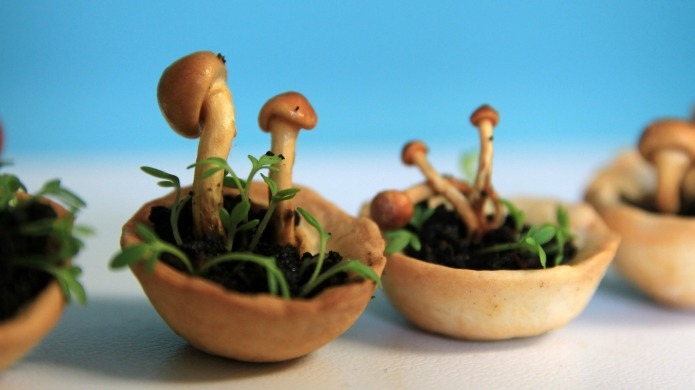 The Edible Growth project makes printing