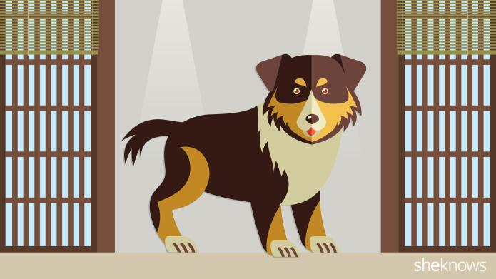 Your ultimate guide to puppy-proofing your