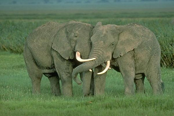 GoDaddy CEO under fire for elephant hunt