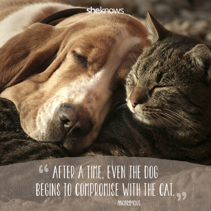 50 Cat quotes that perfectly explain your love for kitties