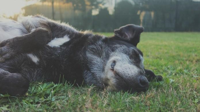 Dog Years to Human Years: How