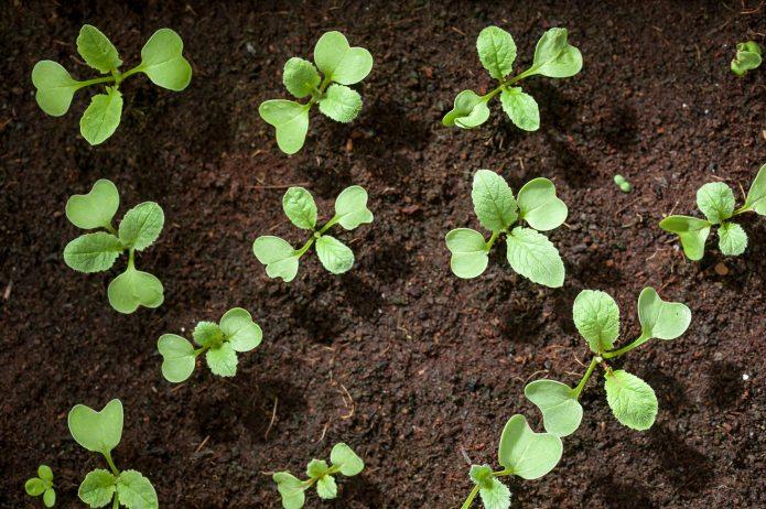 5 natural soil amendments to make