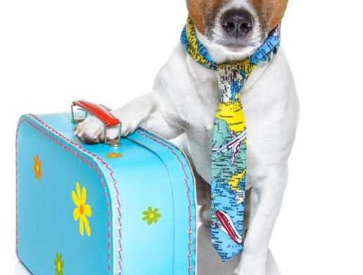 The pet suitcase: 12 Items to