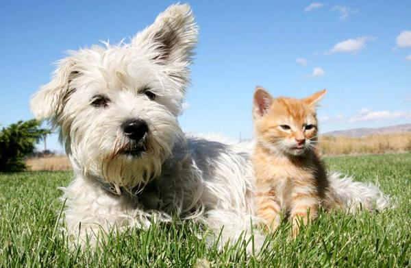 Cats and dogs not getting along?