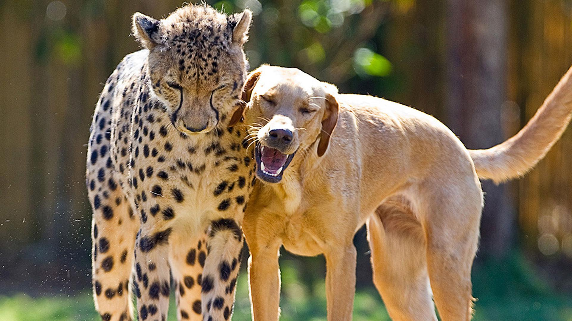 Image of: Unlikely Friendship 11 Unusual Animal Friendships That Prove True Love Is Blind National Geographic Channel 11 Unusual Animal Friendships That Prove True Love Is Blind Sheknows