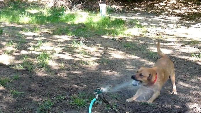 15 Pups that really hate sprinklers