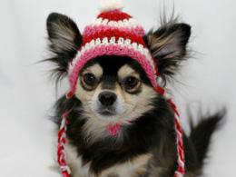 Valentine's Day crocheted dog hat