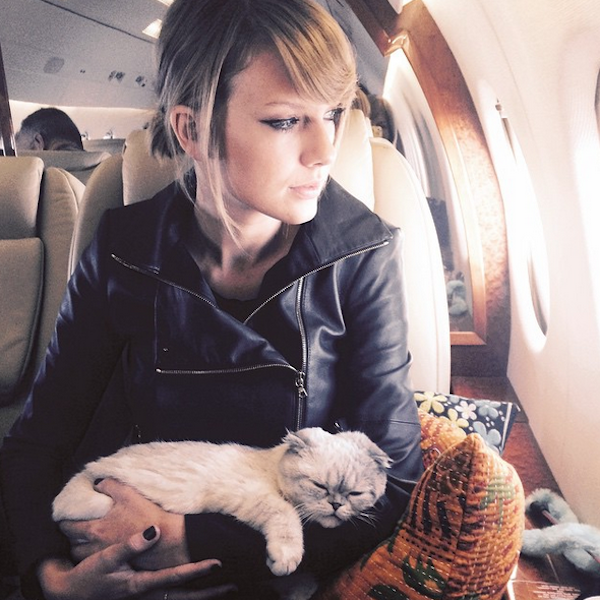 Taylor Swift and cats