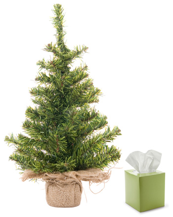 Evergreen and Tissues