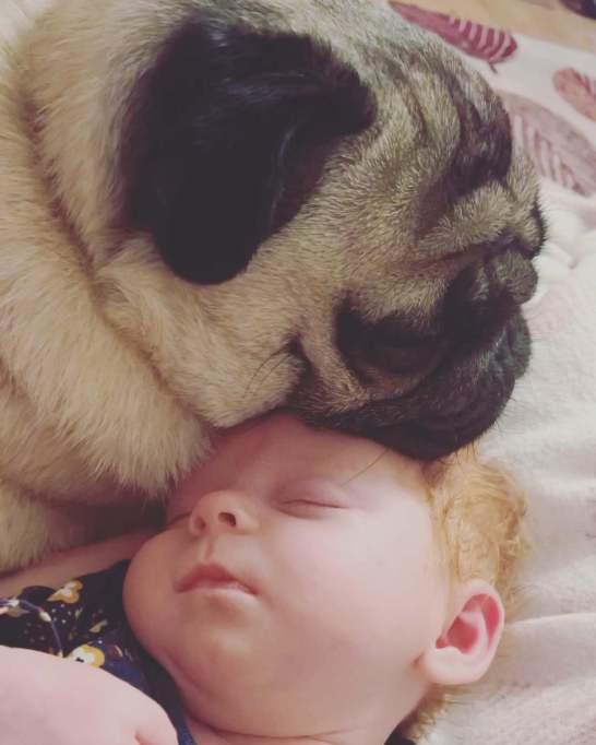 Dog resting head on baby