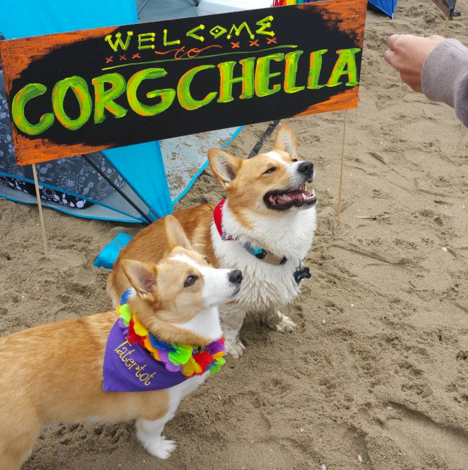 A hippy festival...for dogs