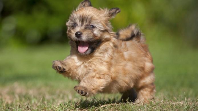 20 Popular & Cute Small Dog
