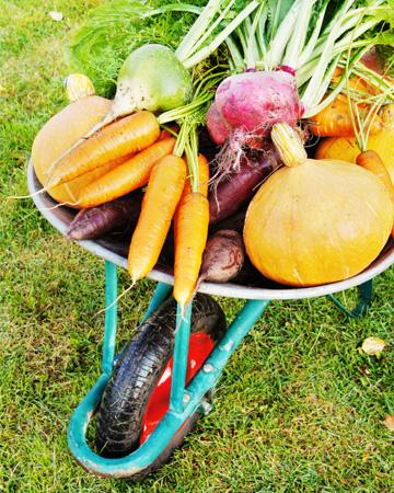 Fall fruits and veggies