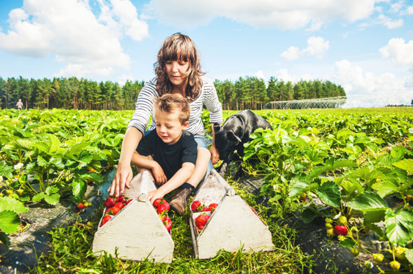 Mother and son picking fresh fruit on farm.