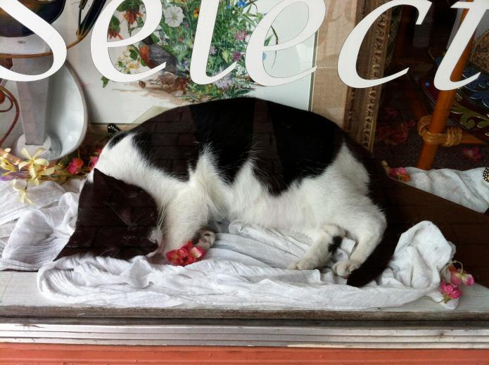 10 cute ways cats make retail