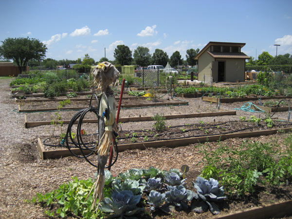 Community gardening in Dallas