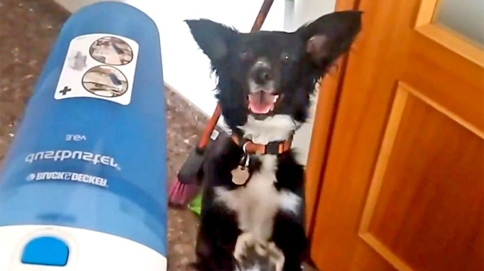 Dog begs for literally everything, and