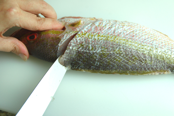 fillet a round fish