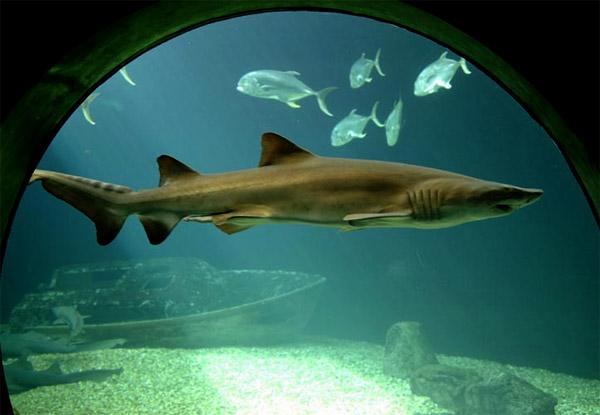 Florida sharks
