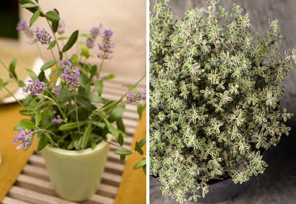 Mother's Day plant ideas