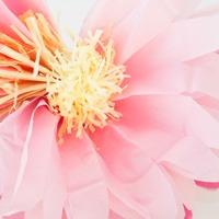 Tissue paper daisies