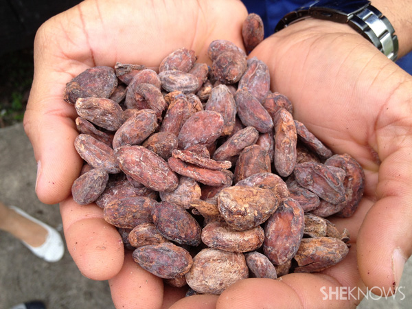 Dried cacao