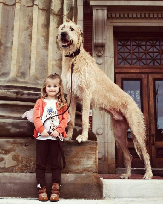 Giant dog with little girl