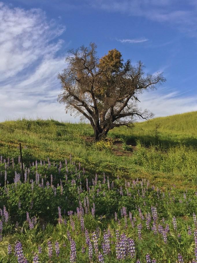Tree in a grassy field