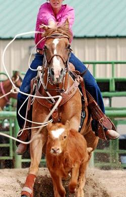 Houston Livestock Show & Rodeo: Not
