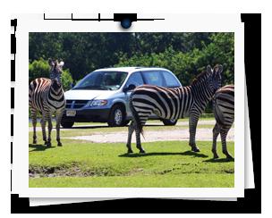 Koa's Lion Country Safari