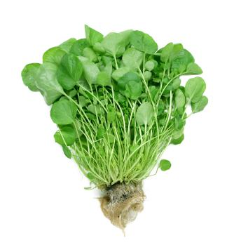 Watercress: The leafy green that fights