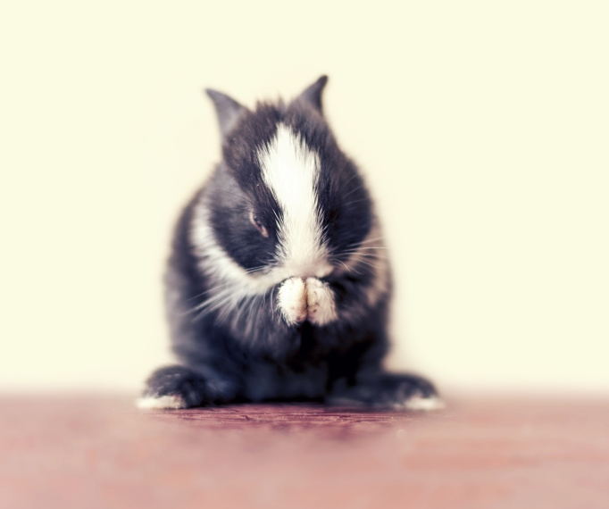 Baby bunny day 16