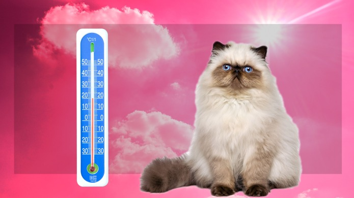 Do Cats Sweat?