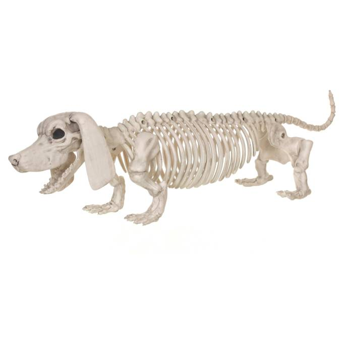 The 15 Best Target Halloween Decorations Under $20 | Cute or creepy, you'll love this dachshund skeleton