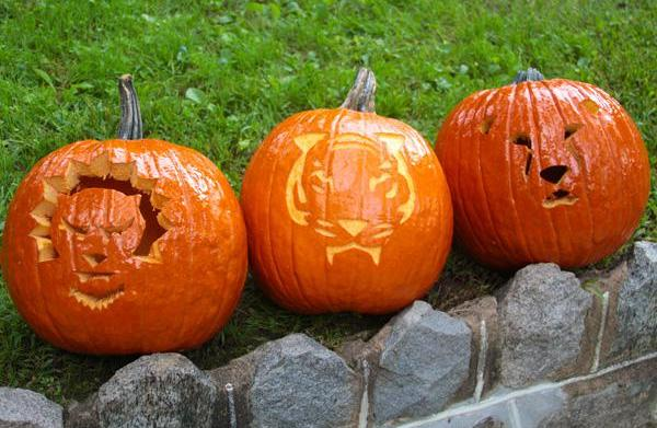 Carve your own cat-o'-lantern