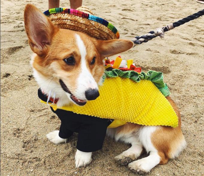 California taco dog
