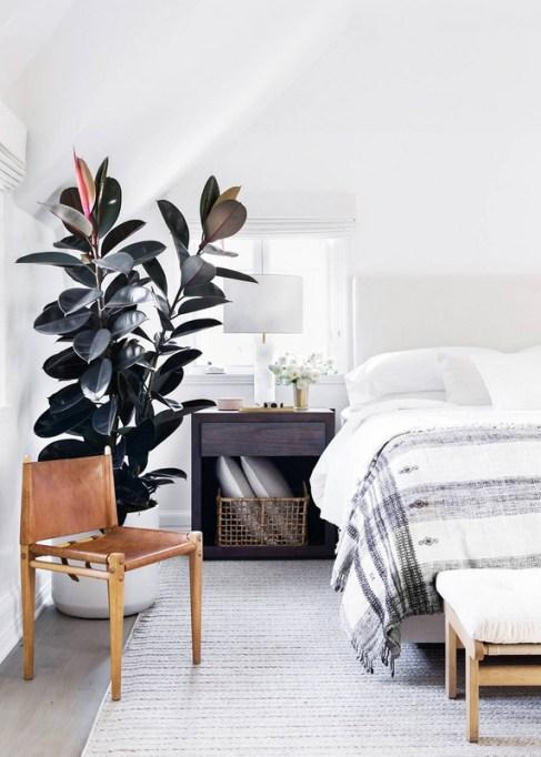 Big, Leafy House Plants: Rubber Tree