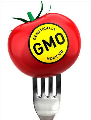 GMO labeled tomato
