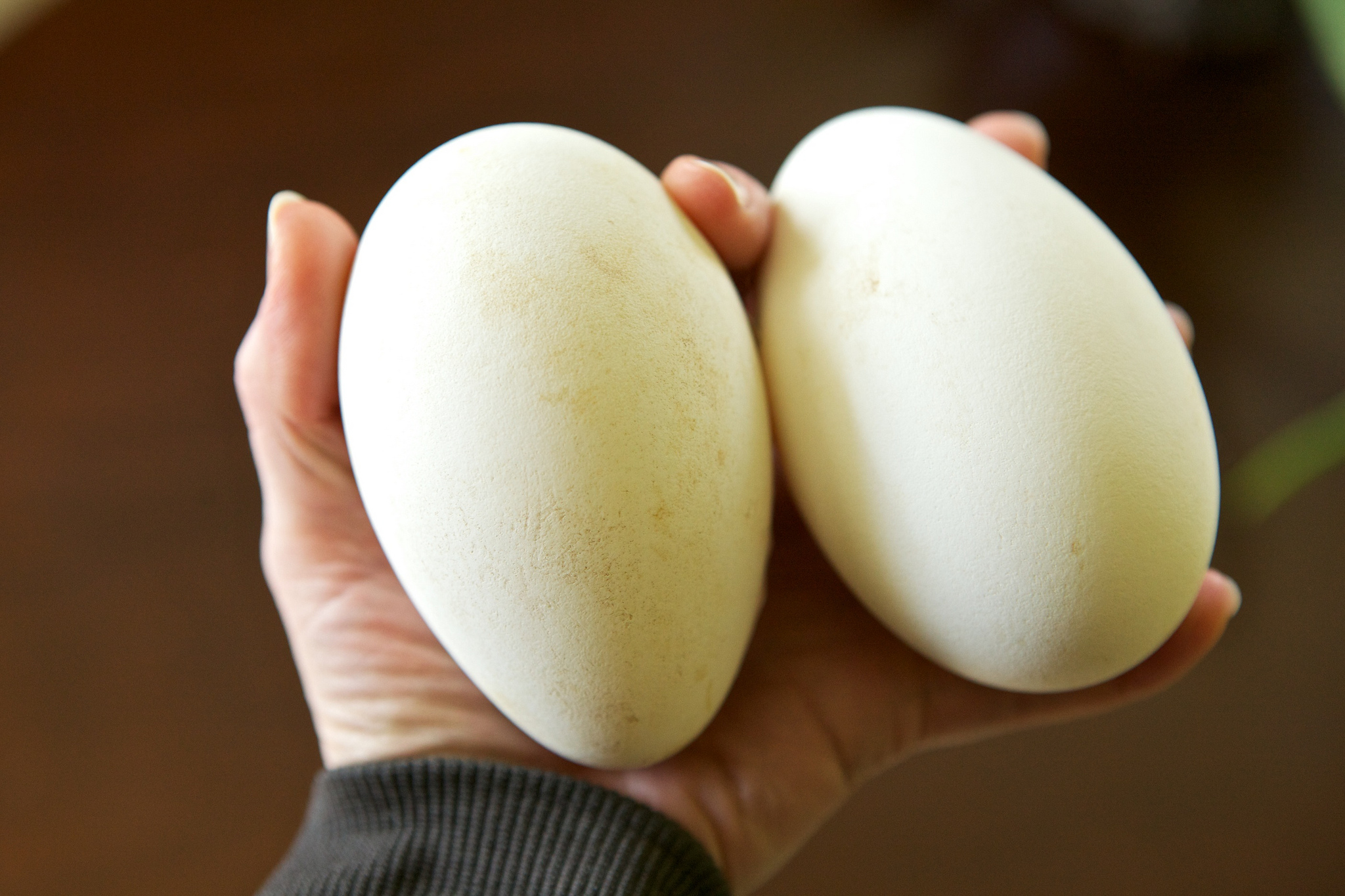 how to cook goose eggs
