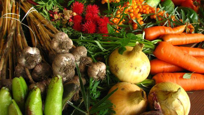 6 Vegan diet tips to meet