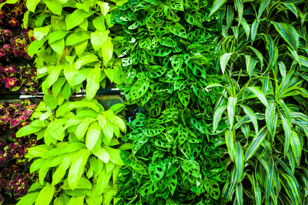 Keep Irrigation Drainage And Lighting In Mind When Thinking About Building Your Own Vertical Garden